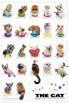 THE CAT - compilation plakáty | fotky | obrázky | postery