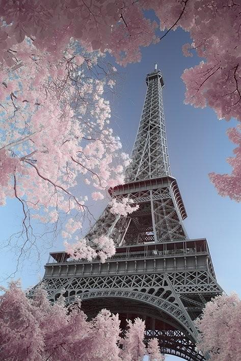 Posters Plakát, Obraz - Paříž - Eiffel Tower, David Clapp, (61 x 91,5 cm)