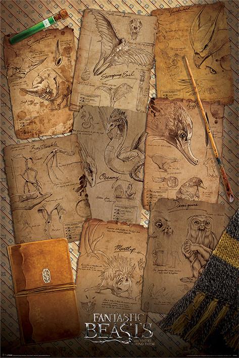 Posters Plakát, Obraz - Fantastická zvířata a kde je najít - Notebook Pages, (61 x 91,5 cm)