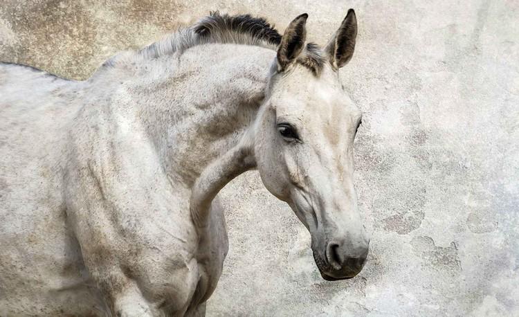 Posters Fototapeta Koně Pony, (416 x 254 cm) 416x254 cm - 130g/m2 Vlies Non-Woven