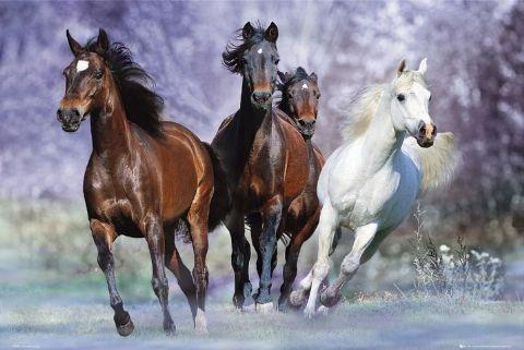 Posters Plakát, Obraz - Running horses - bob langrish, (91,5 x 61 cm)