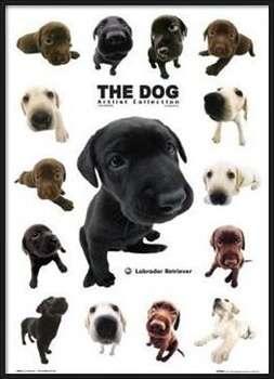 The dog rámovaný plakát