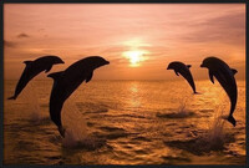 Delfíni rámovaný plakát