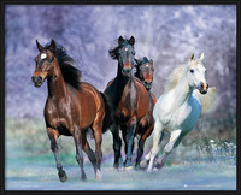 Running Horses - Bob Langrish plakáty | fotky | obrázky
