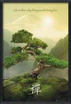 Rámovaný plakát Zen