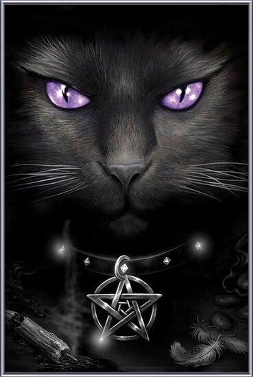 Magical cat rámovaný plakát