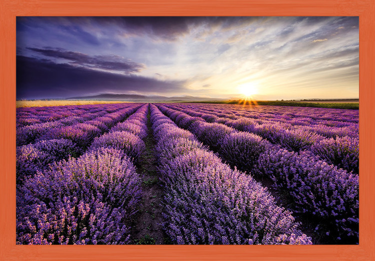 Plakát  Lavendar Field Sunset