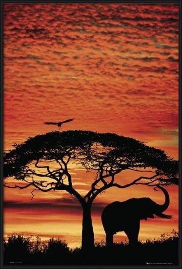 Plakát Africa Sunset - slon