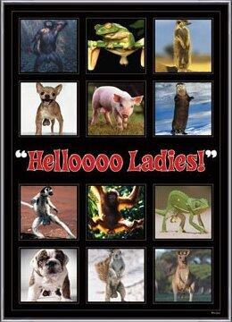 Plakát  Hellooo ladies ! - montage