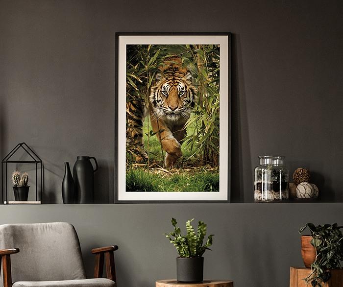 Umělecká fotografie Sunset Lioness