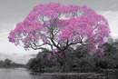 Strom - Pink Blossom