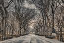 Assaf Frank - New York Central Park