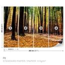 Příroda - Les - Podzim